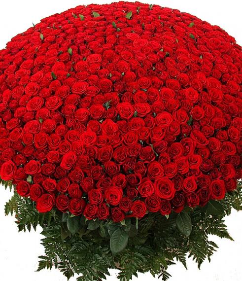 красивые розы картинки красные
